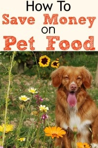 How To Save Money On Dog Food And Cat Food